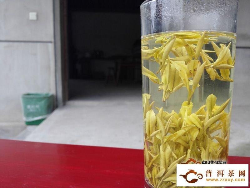 黄金芽和黄金叶的区别