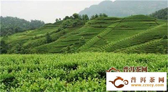 四川省将成立精制川茶产业联盟