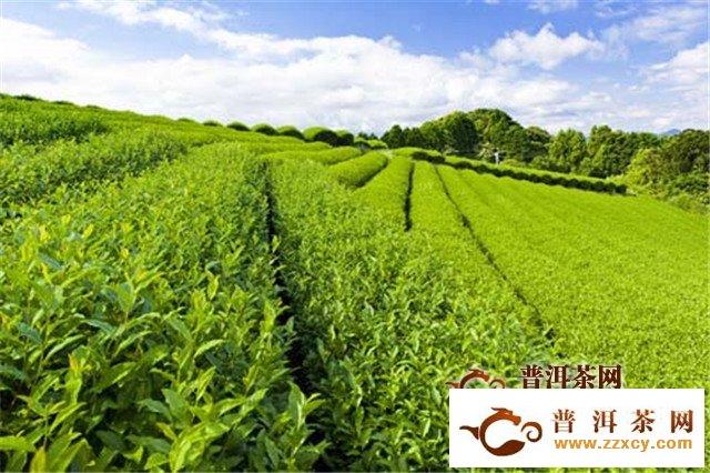 国际茶文化展开幕,马连道茶叶一条街推近60项特色活动