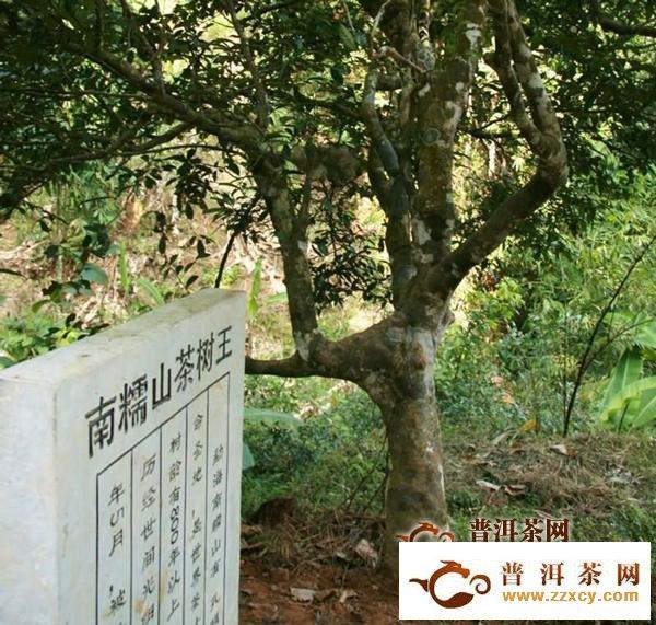 南糯山属于哪个茶区