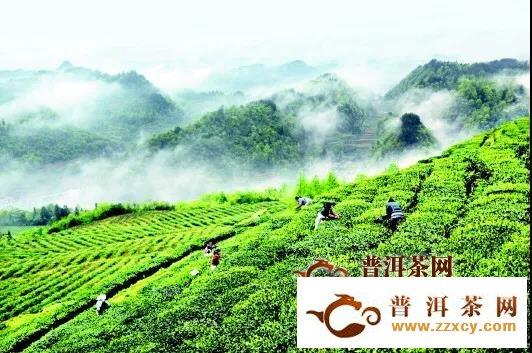 凤冈茶产业系列报道之:因茶富裕的美丽乡村——田坝